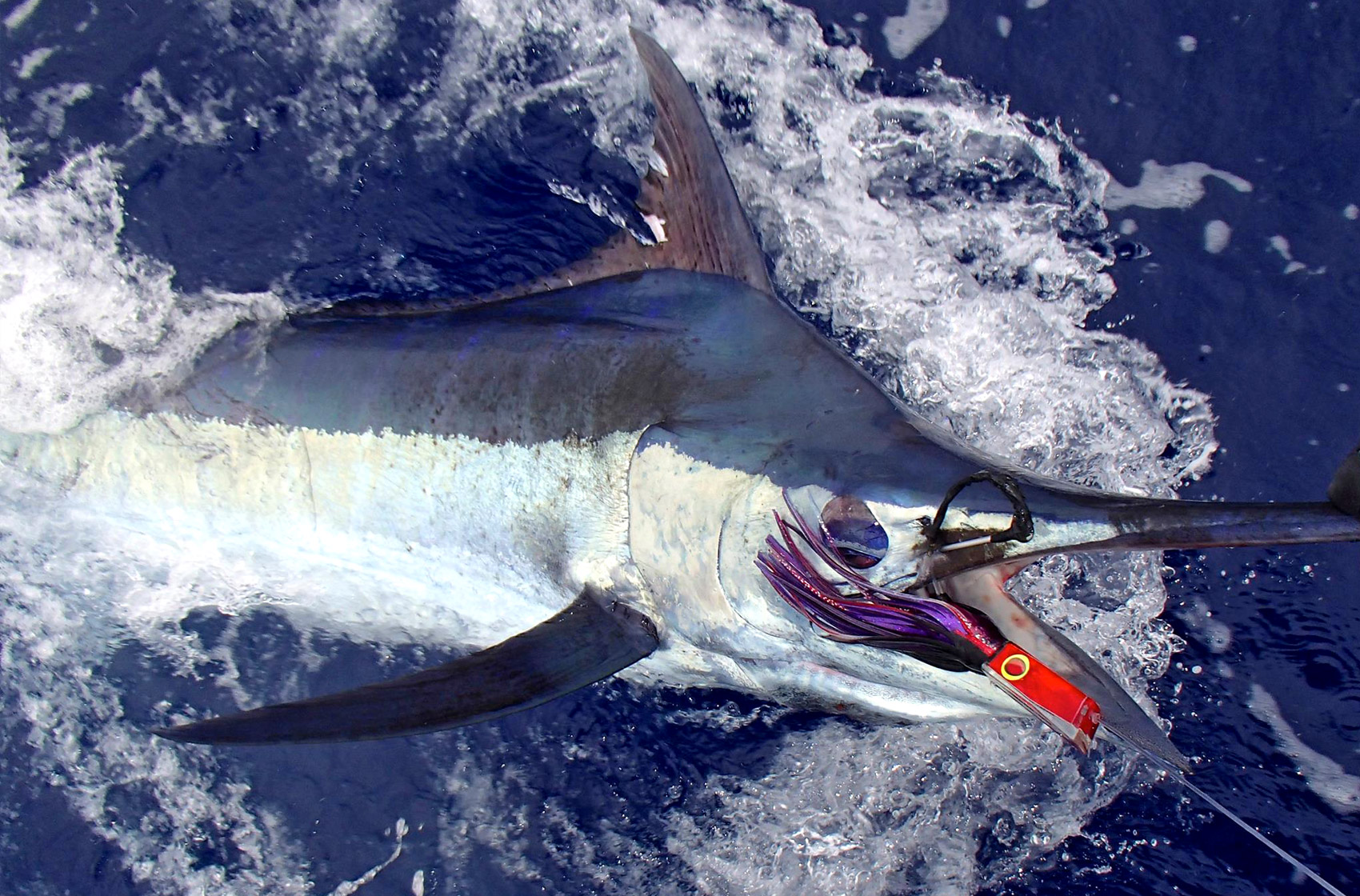 Maui Sport Fishing Marlin