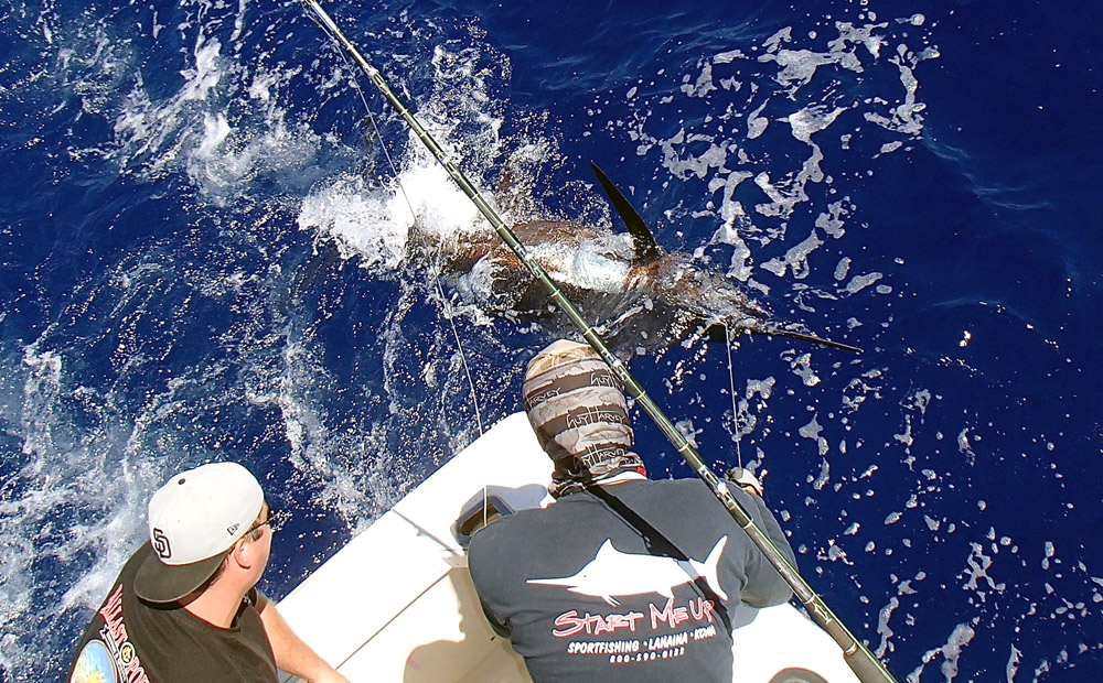sport-fishing-maui-catch-marlin
