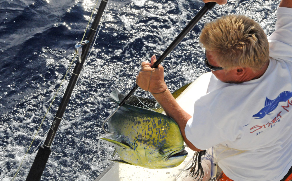 Sport Fishing Maui Mahi Catch
